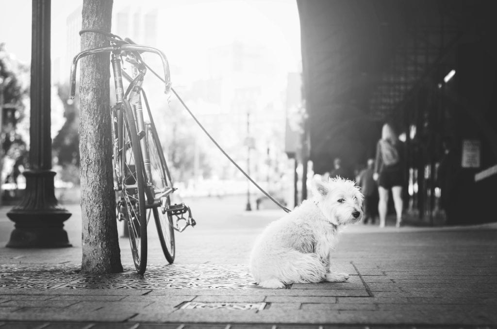 OmniFocus 3 - Dog Waiting Tag
